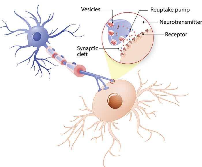 o que causa depressão neurotransmissores